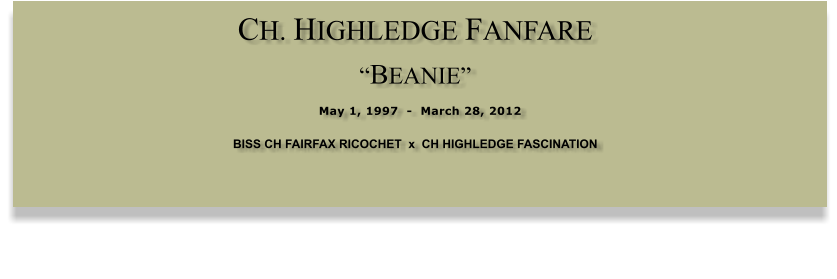 "CH. HIGHLEDGE FANFARE  ""BEANIE""  May 1, 1997  -  March 28, 2012 BISS CH FAIRFAX RICOCHET  x  CH HIGHLEDGE FASCINATION"