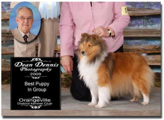 Chamois is pictured winning the Puppy Group in Orangeville under well respected breeder judge Fred Gordon.  Chamois is  shown exclusively by Shirley Perry of Omega Collies.