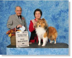 Emmie FINISHES in style by taking BEST OF BREED, GROUP 4TH AND BEST PUPPY IN GROUP under Breeder/Judge Fred Gordon.  Congratulations to Cathy & Emmie. A HUGE THANK YOU  to Shirley Perry for her expert care and presentation of the Highledge Gang!