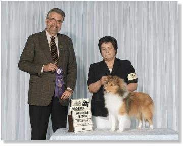 October 20th,2007...Emmie started her show career, at the Canadian Shetland Sheepdog Association Booster in Bellville Ontario.  She came home with Winners Bitch for 3 points under respected judge Jim Reynolds at the tender age of 7 months and 5 days.