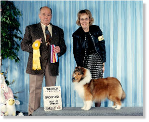 Gabby's  First Show Winners Bitch ~ Best of Winners ~ Best of Breed Group 3rd