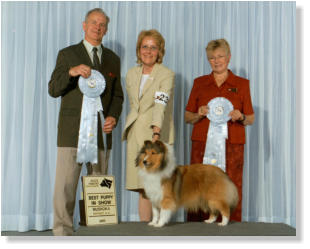 Our sincere thanks to judges Mel and Joan Beach for the wonderful  BACK TO BACK Best Puppy in Show wins.