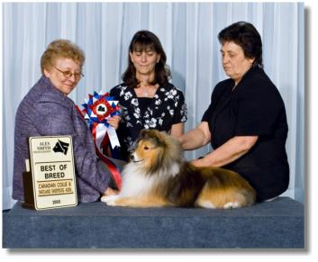 Maddison is pictured in May 2008 winning Best of Breed from the Veteran Class. Thanks to Shirley Perry for her expert handling of our sweet ol' girl
