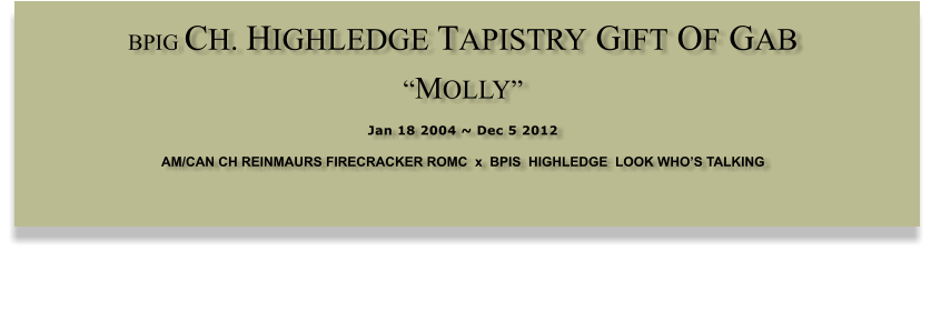 "BPIG CH. HIGHLEDGE TAPISTRY GIFT OF GAB  ""MOLLY""  Jan 18 2004 ~ Dec 5 2012 AM/CAN CH REINMAURS FIRECRACKER ROMC  x  BPIS  HIGHLEDGE  LOOK WHO'S TALKING"
