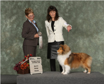 Olivia is pictured at 7 1/2 years old in the unofficial Veterans Class.  She is as beautiful now as she was as a puppy. She LOVED to be back in the ring.  It was the first time in years she had been to a show, and how lucky was I to take her on the trip.