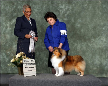 Paired up with Shirley Perry (Omega Collies) for a fun day, Olivia got the nod from Judge Sue-Ellyn Rempel, for Best Veteran in Show. We thank her for the win and for her nice comments about our sweet girl.