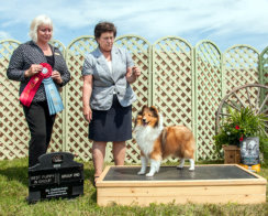 BEST OF BREED, GROUP TWO AND BEST PUPPY IN GROUP TO COMPLETE HER GRAND CHAMPIONSHIP